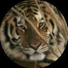 Animals Cases & Skins