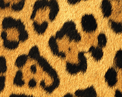 Animal Prints Phone Cases and Skins
