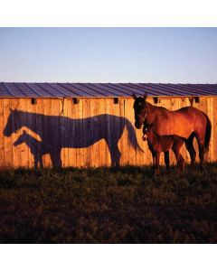 Horses at Sunset In Montana Apple TV Skin