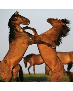 Two Stallions at a Wild Horse Conservation Center Apple TV Skin