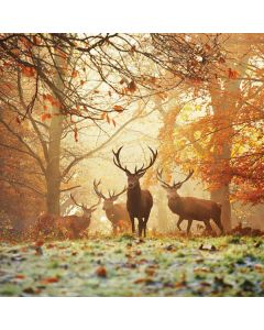 Four Red Deer Surface Go Skin