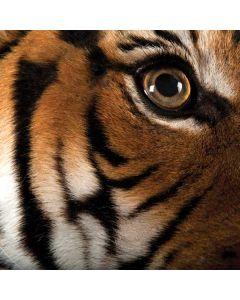 Malayan Tiger Apple TV Skin