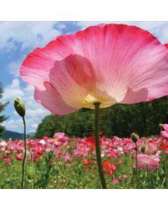 Pink Poppy Petals Galaxy Book Keyboard Folio 12in Skin