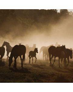 Protected Mustang Herd Motorola Droid Skin