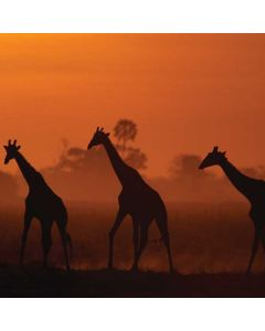 Giraffes Silhouetted At Twilight Apple TV Skin
