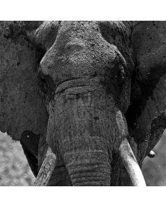 Black and White Elephant LifeProof Nuud iPhone Skin
