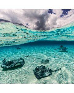 Underwater Sting Rays LifeProof Nuud iPhone Skin