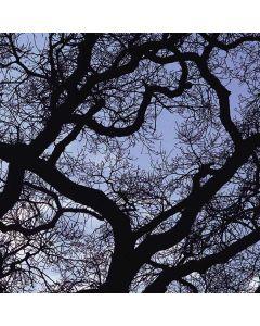 Tree Branches Apple MacBook Pro Skin