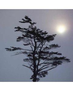 Tranquil Tree PlayStation VR Skin