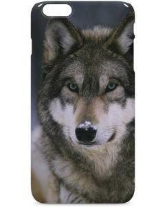 Gray Wolf at International Wolf Center iPhone 6/6s Plus Lite Case