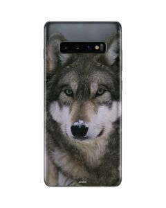 Gray Wolf at International Wolf Center Galaxy S10 Plus Skin