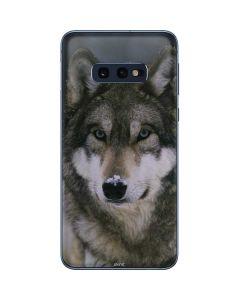 Gray Wolf at International Wolf Center Galaxy S10e Skin