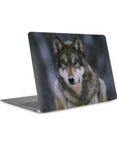 Gray Wolf at International Wolf Center Apple MacBook Air Skin
