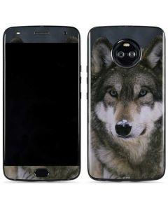 Gray Wolf at International Wolf Center Moto X4 Skin