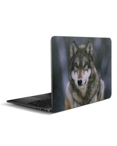 Gray Wolf at International Wolf Center Zenbook UX305FA 13.3in Skin