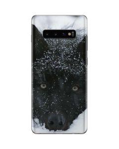 Gray Wolf Resting In Deep Snow Galaxy S10 Plus Skin