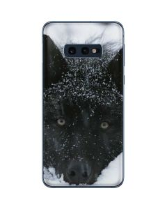 Gray Wolf Resting In Deep Snow Galaxy S10e Skin