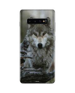 Stoic Gray Wolf Galaxy S10 Plus Skin