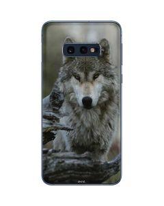Stoic Gray Wolf Galaxy S10e Skin