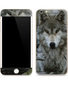 Stoic Gray Wolf iPhone 6/6s Plus Skin