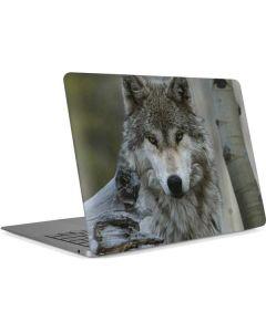 Stoic Gray Wolf Apple MacBook Air Skin