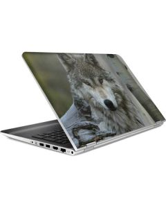 Stoic Gray Wolf HP Pavilion Skin