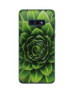 Succulent Plant Galaxy S10e Skin