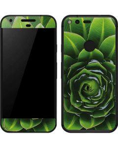 Succulent Plant Google Pixel Skin