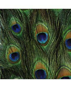 Peacock SONNET Kit Skin