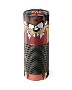 Taz Amazon Echo Skin