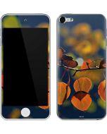 Autumn Aspen Leaves in Yosemite Apple iPod Skin