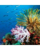 Crinoid and a Soft Coral Tree Dell XPS Skin