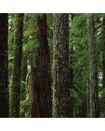 Evergreen Forest PS4 Slim Bundle Skin