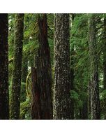 Evergreen Forest Apple iPod Skin