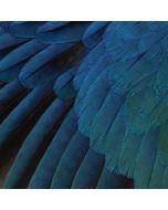 Macaw Amazon Echo Skin