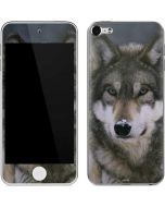 Gray Wolf at International Wolf Center Apple iPod Skin