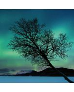 Aurora Borealis over Sandvannet Lake iPhone 6/6s Skin