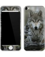 Stoic Gray Wolf Apple iPod Skin